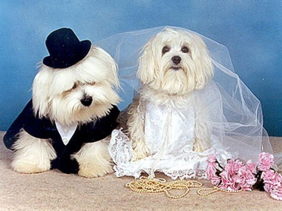 the-world_s-top-10-best-images-of-animals-getting-married-2